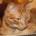 Venice-Cats-com-store-Blog_Campari-the-red-cat.jpg