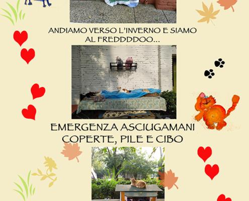 VeniceCatsCom_mici del forte mail 15.10.20 EMERGENZA asciugamani