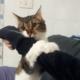 venicecatscom_venice_cats_com_NANA_cover